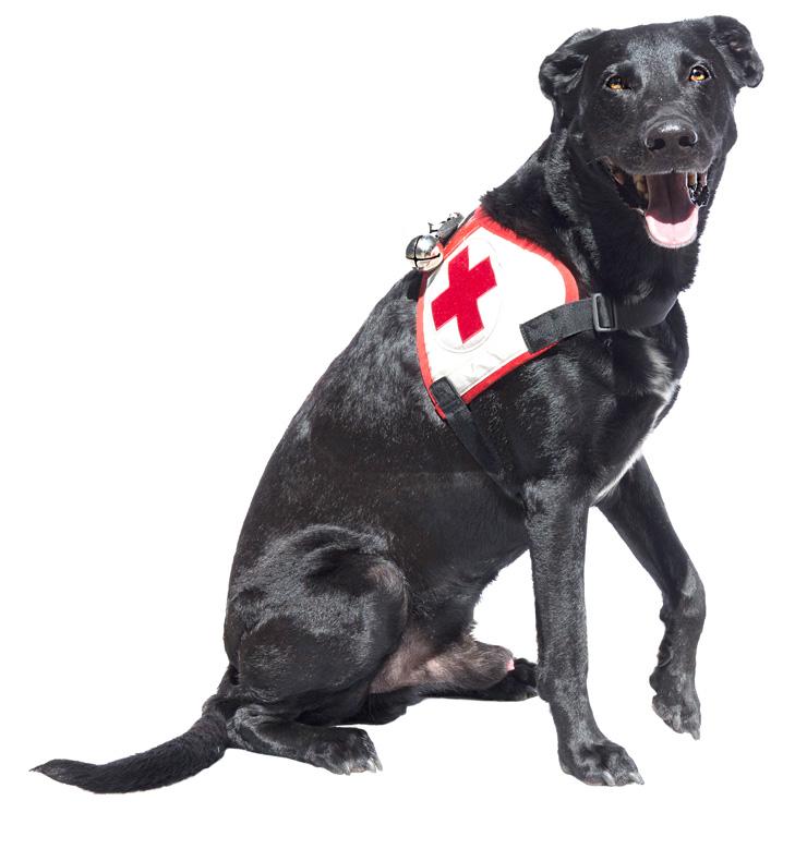 Rettungshund Kocke sitzend
