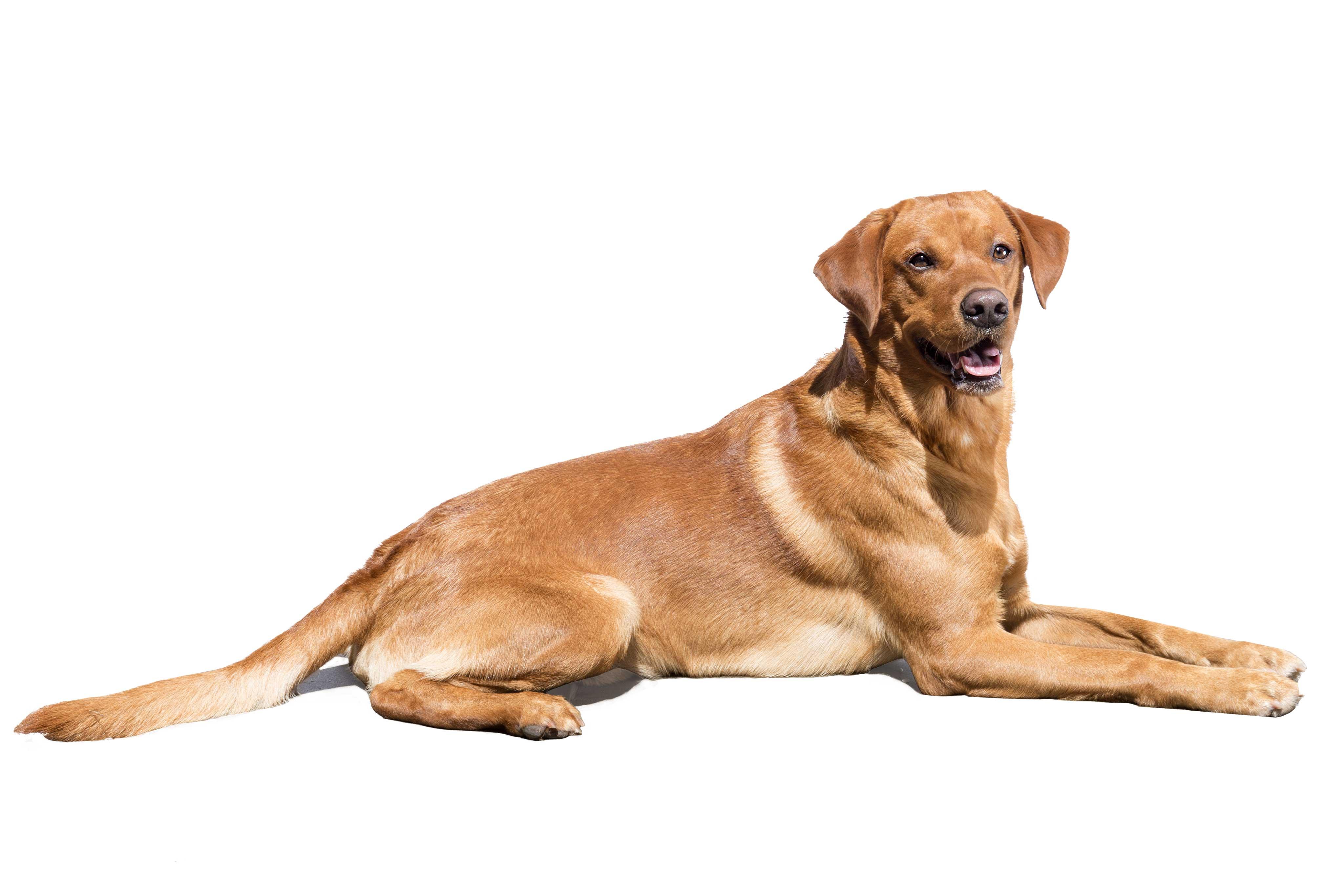 Hund Spencer der Rettungshundestaffel Fürth