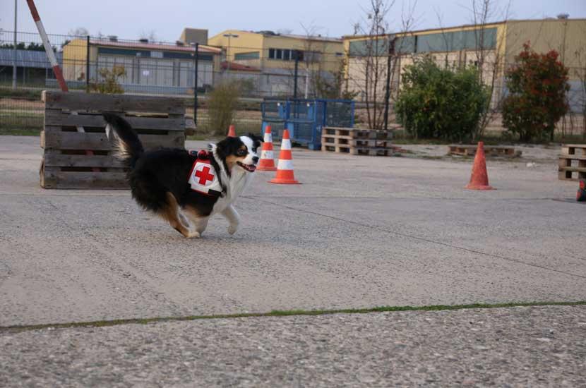 Rettungshund_beim_Training