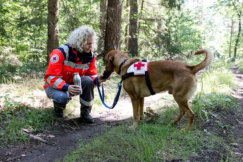 Rettungshundestaffel-Hund-Spencer