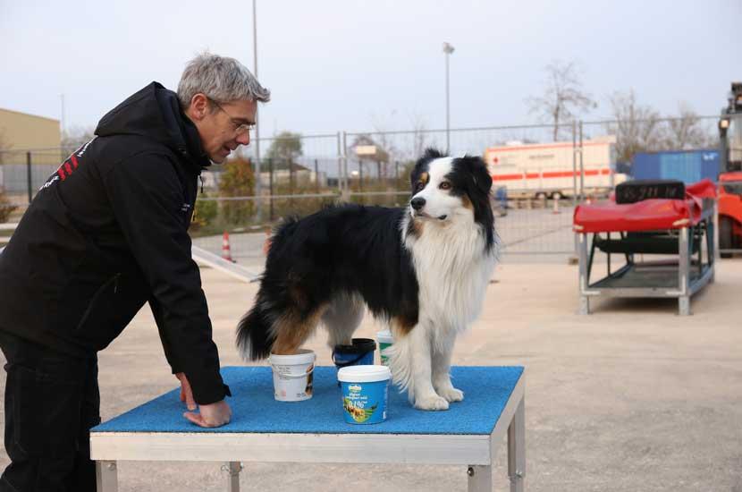 Training_Rettungshunde_Vertrauen
