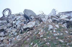 Trümmerhund Kocke bei der Suche