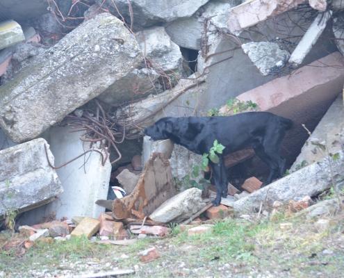 Trümmerhund Kocke zeigt an